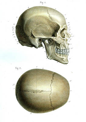 Skullcap Photograph - Human Skull by Collection Abecasis