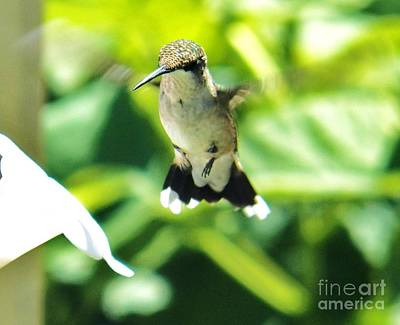 Photograph - Hummingbird 1 2014 by Judy Via-Wolff