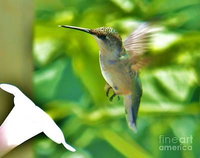 Photograph - Hummingbird 2 2014 by Judy Via-Wolff