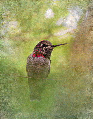 Tiny Bird Photograph - Hummingbird  by Angie Vogel