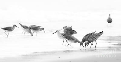 Photograph - Hungry Birds by Patty Descalzi