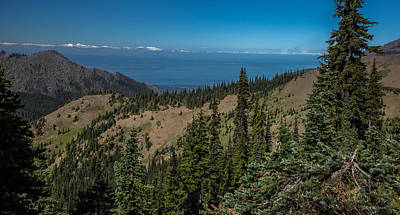 Photograph - Hurricane Ridge- Olympic National Park by Tim Bryan