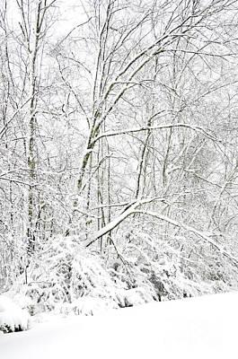 Virginia Snow Photograph - Hurricane Sandy Snow  by Thomas R Fletcher