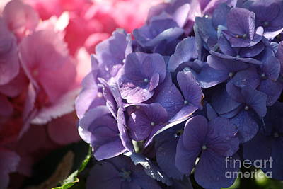 Photograph - Hydrangea by Mary-Lee Sanders