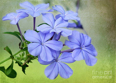 Photograph - I Love Blue Flowers by Sabrina L Ryan