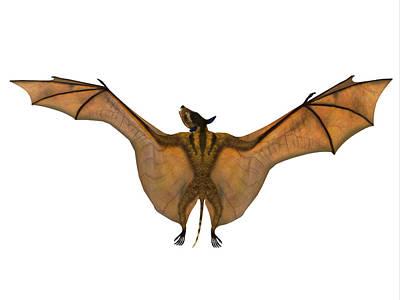 Photograph - Icaronycteris Bat Wings by Corey Ford
