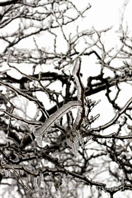 Photograph - Ice On Branches by Blink Images