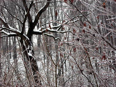 Photograph - Ice Storm by David Olson
