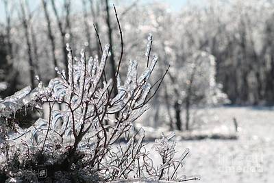 Photograph - Ice Storm Snowball Bush by J McCombie