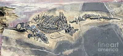 Triassic Photograph - Ichthyosaur Fossil by Dirk Wiersma