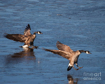 Photograph - Icy Landing by Dale Nelson