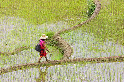 Igorot Tribal Woman With The Rice Art Print