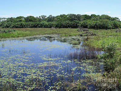 Travel Rights Managed Images - IImages from the Pantanal Royalty-Free Image by Carol Ailles