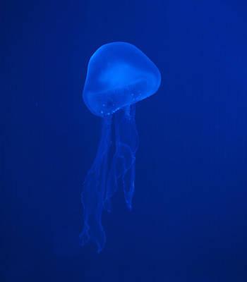 Illuminated Colour Jellyfish Original