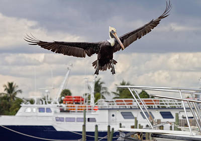 Photograph - In For A Landing by Kim Hojnacki