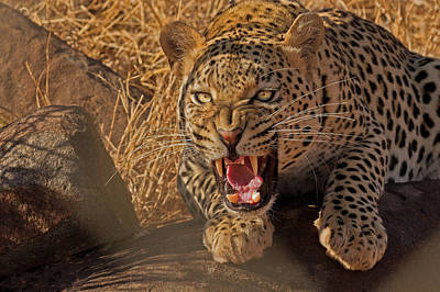 Aggressive Photograph - In No Uncertain Terms by Ashley Vincent