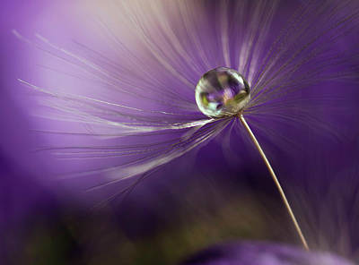 Delicate Photograph - In Shades Of Purple by Heidi Westum