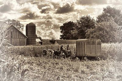 Amish Photograph - In The Corn by David Arment