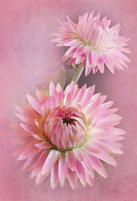 Strawflower Photograph - In The Pink by David and Carol Kelly