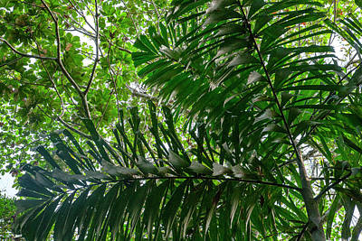 Amazon River Photograph - In The Upper Amazon Jungle, On A Trail by Mallorie Ostrowitz