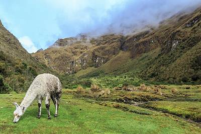 Alpaca Wall Art - Photograph - Inca Trail To Machu Picchu by Photostock-israel/science Photo Library