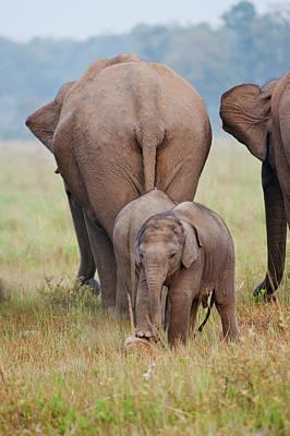 Mother Elephant Photograph - Indian Asian Elephant, Mother by Jagdeep Rajput