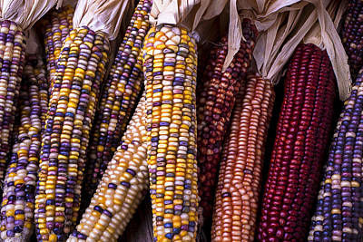 Indian Corn Wall Art - Photograph - Indian Corn by Garry Gay