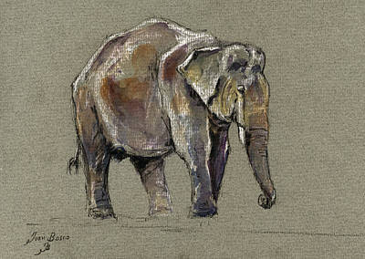 Asia Wall Art - Painting - Indian Elephant by Juan  Bosco