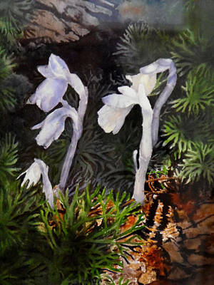 Painting - Indian Pipes by Enola McClincey