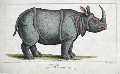 Indian Rhinoceros Art Print by Paul D Stewart