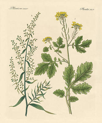 Oder Drawing - Indigenous Spice Plants by Splendid Art Prints