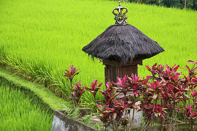 Indonesia, Bali Terraced Subak Print by Emily Wilson
