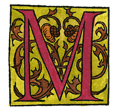 Thistle Painting - Initial 'm', 1544 by Granger