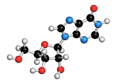 Nucleoside Photograph - Inosine Nucleoside Molecule by Molekuul