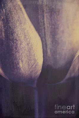 Purple Flower Flower Image Photograph - Inspiration by Angela Doelling AD DESIGN Photo and PhotoArt