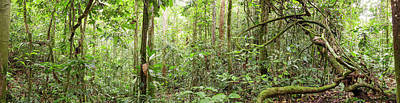 Interior Of Tropical Rainforest Art Print by Dr Morley Read