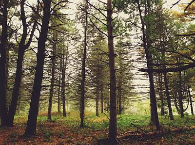 Art Print featuring the photograph Into The Forest by Nikki McInnes