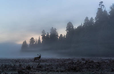 Photograph - Into The Mist by Scott Warner