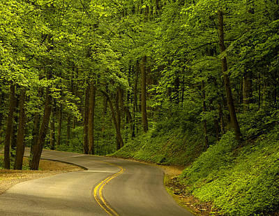 Smokies Photograph - Into The Woods by Andrew Soundarajan
