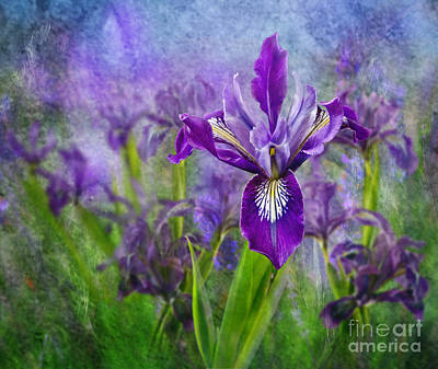 Photograph - Iris Garden by Shirley Mangini