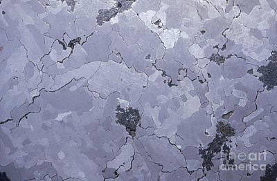 Nickel Photograph - Iron-nickel Meteorite, Widmanstatten by Gregory G. Dimijian, M.D.
