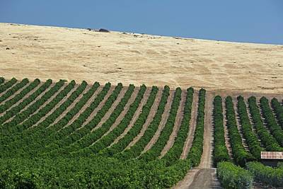 Agronomy Photograph - Irrigated Orchard by Jim West