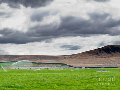 Purely Purple - Irrigating lush farm pastures in central Otago NZ by Stephan Pietzko