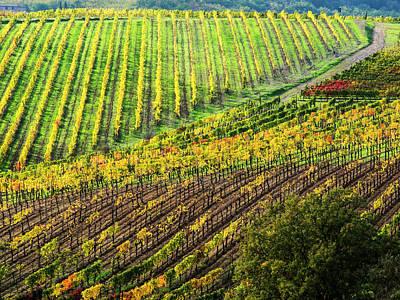 Autumn Farm Scenes Photograph - Italy, Montepulciano, Autumn Vineyard by Terry Eggers