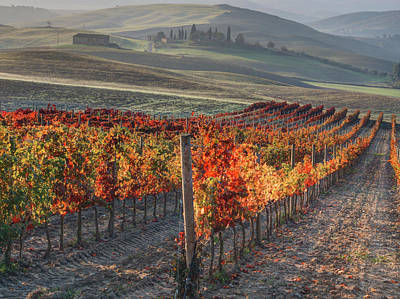 Autumn Farm Scenes Photograph - Italy, San Quirico, Autumn Vineyards by Terry Eggers