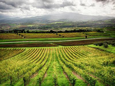 Autumn Farm Scenes Photograph - Italy, Tuscany, Autumn Vineyards by Terry Eggers