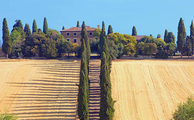 Italy, Tuscany - Farmhouse With Cypress Art Print by Panoramic Images