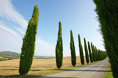 Gravel Road Photograph - Italy, Tuscany Road And Cypress Trees by Jaynes Gallery