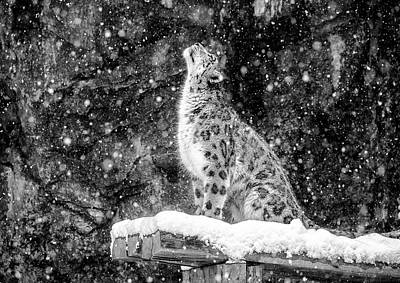 Zoo Animal Wall Art - Photograph - It's Snowing by David Williams
