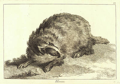 Badgers Drawing - Jacques-philippe Le Bas And Jean Eric Rehn by Litz Collection
